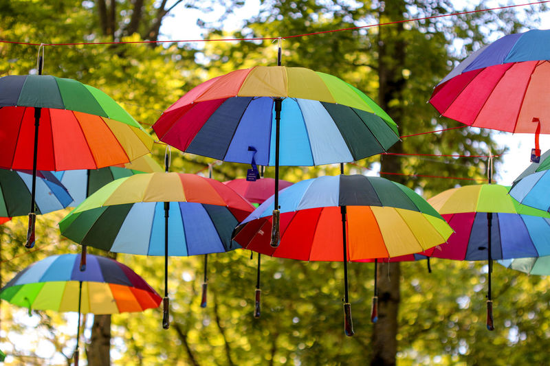 City Close-up Cluj-Napoca Colorful Colorful Umbrella Colorful Umbrellas Day Multi Colored Nature No People Outdoors Park Protection Romania Safety Tree Tree Umbrella Umbrella Revolution Umbrellas Variation Place Of Heart