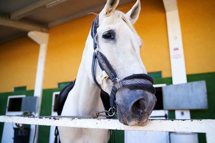 Close-up of horse in stable