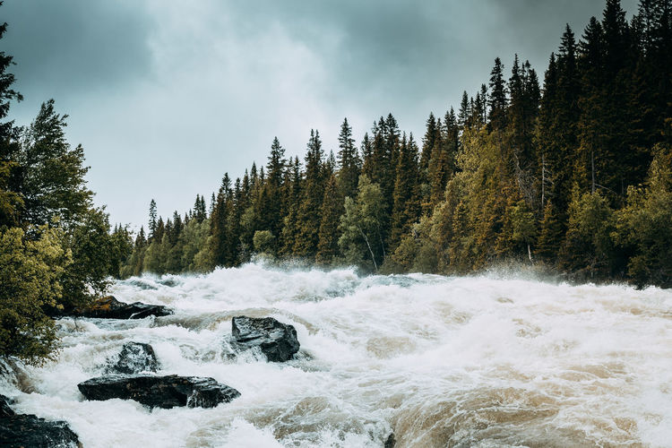 Tännforsen outside Åre, rainy day with moody skies. Beauty In Nature Beauty In Nature Day Eye4photography  EyeEm EyeEm Gallery EyeEm Nature Lover EyeEmNewHere Fast Moving Water Moody Sky Motion Nature No People Outdoors Power In Nature Rapids Roaring Scenics Sky Splash The Great Outdoors - 2017 EyeEm Awards The Week On Eyem Tree Water Waterfall