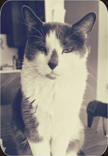 Anotherphoto Thinking Of A Master Plan Cat♡ I Caught Mischievous Expression Sepia_collection Monochrome Catlovers Tadaa Community Popular Photos