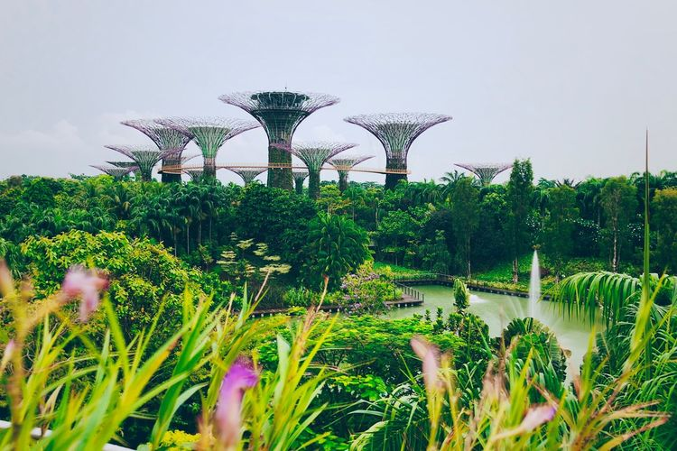 Gardens by the Bay Botanical Garden Shot On IPhone Landmark Singapore Plant Sky Growth Nature Day Green Color No People Beauty In Nature Tree Grass Outdoors Clear Sky Tranquility Built Structure Architecture Flower The Mobile Photographer - 2019 EyeEm Awards