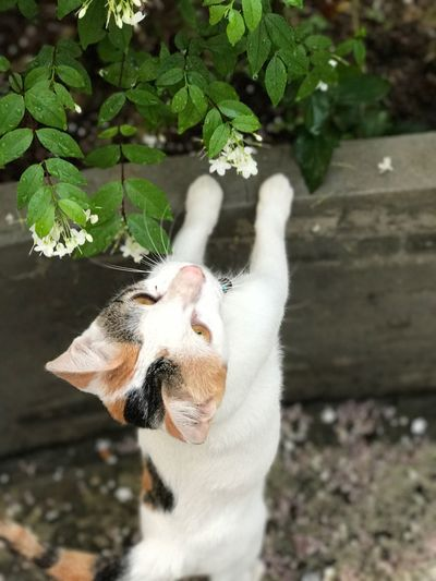 High angle view of white cat on plant