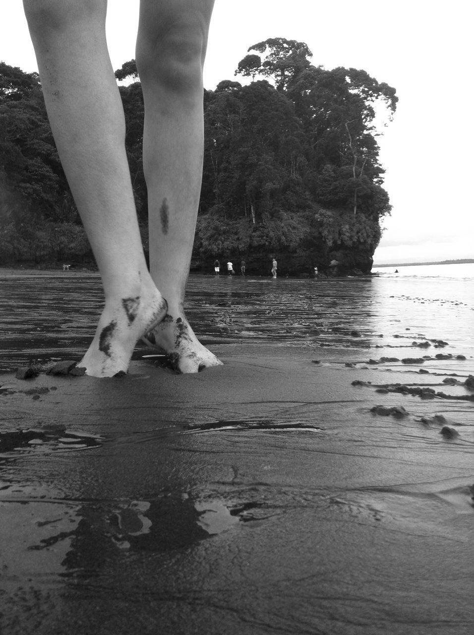 low section, real people, barefoot, human leg, one person, water, standing, day, lifestyles, outdoors, beach, women, sea, sand, nature, human body part, ankle deep in water, tree, people