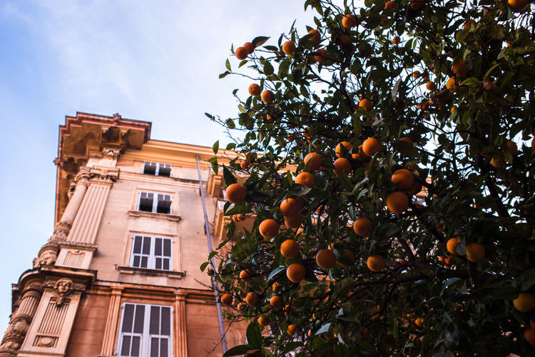 Low angle view of orange tree against sky in italy
