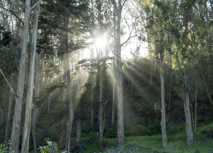 Beaming through the Trees
