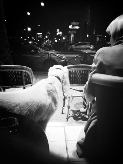 Cappucino Drinking A Latte Persan dog. Il est magnifique Animals ?