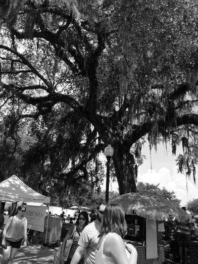 Tree Wintergarden Orlando Florida Blackandwhite Monochrome Outdoors Real People Day Nature Photography