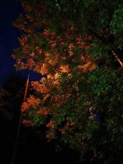 RGB от природы. Nature Autumn Leaves