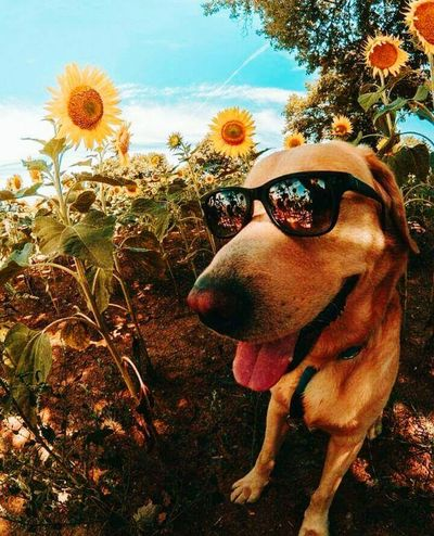 Dog Sunglasses One Animal Pets Animal Themes Domestic Animals No People Mammal Day Outdoors Sky