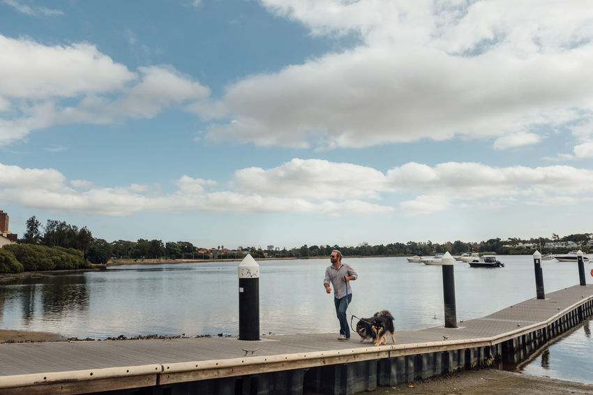 Finnish Lapphund dogs on a walk. Cloud - Sky Day Dock Dog Finnish Lapphund Fluffy Full Length Health Landscape Leash Leisure Activity Man Nature Outdoors Park Pet Real People Sky Standing Walk Walking Water