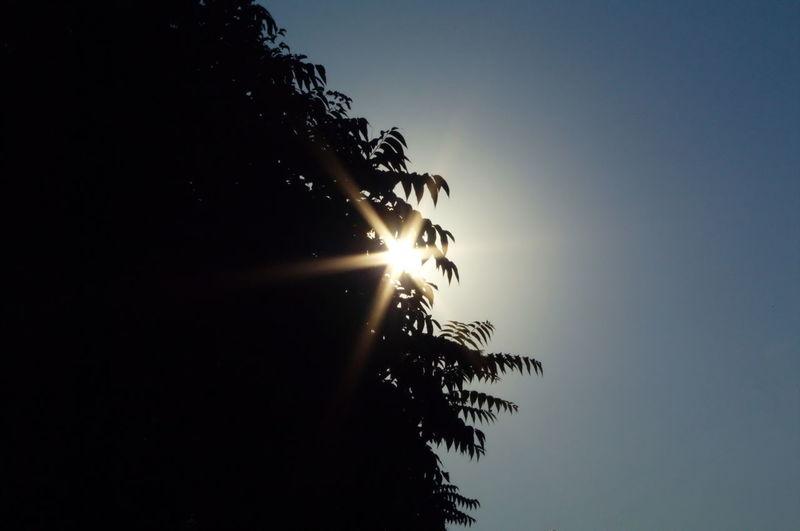 Blue Blue Sky Leaf Leafs Ray Rays Sky Skylea Sun Sunrays