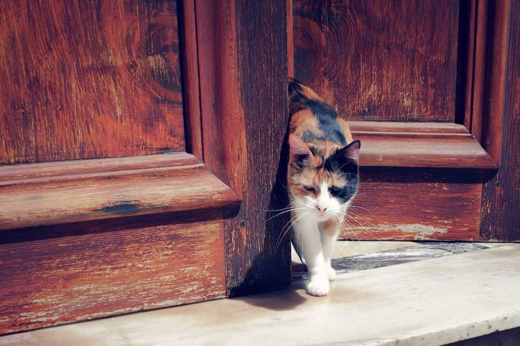 Cat going out through the door Domestic Cat Domestic Old Door Old Photo Cat Door Cat Going Out Kitty Three Color Cat EyeEmNewHere Best EyeEm Shot Vintage Cat Cat At Home Cats Of EyeEm Pets Feline Cat Stray Animal Kitten Domestic Animals At Home Tabby Cat Tabby A New Beginning