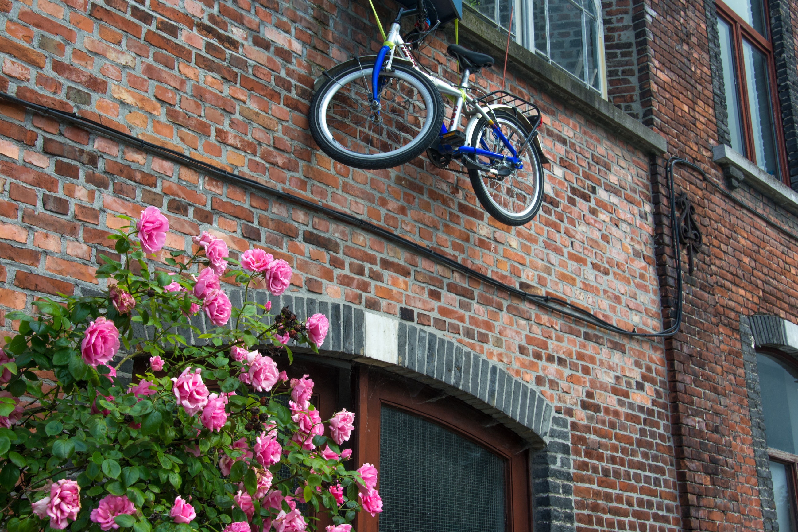 VIEW OF FLOWERS AGAINST BRICK WALL