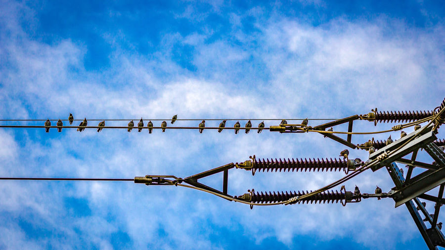 Birds Construction Site Crow Electricity  Electricity Pylon Low Angle View Outdoors Power Line  Sky