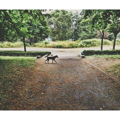 Dog Dogstagram Hund Park naturehappyberlinvscocamvsconaturevscophilevscoloverstweegraminstasizeinstabestinstagoodpicofthedayphotoofthedayigersgermanyig_deutschland