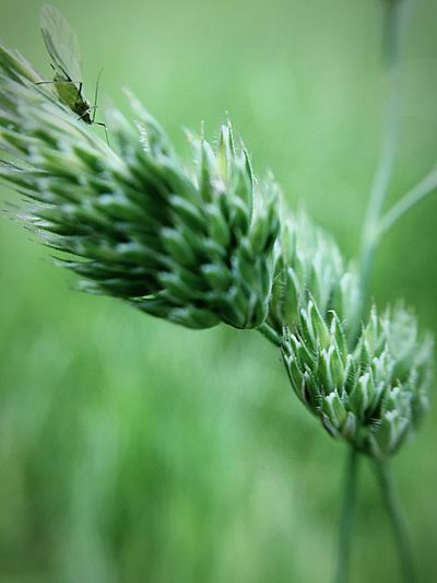 Plant Close-up Green Color Beauty In Nature Nature Growth Focus On Foreground No People Animal Wildlife Animals In The Wild Invertebrate Animal Insect Animal Themes One Animal Outdoors Freshness