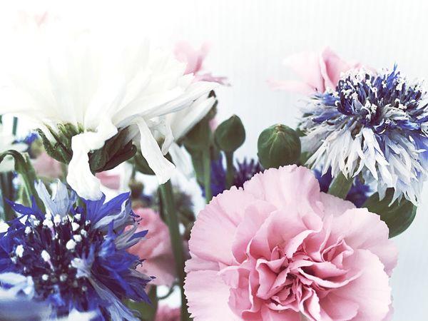 Flower Flowerporn EyeEm Nature Lover EyeEm Flower Colors Nature Beauty Among The Wilted  Summer