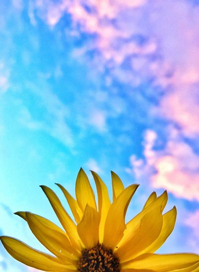 Check This Out Nature Summer Sky EyeEm Best Shots Sunset EyeEm Nature Lover Flowers Taking Photos