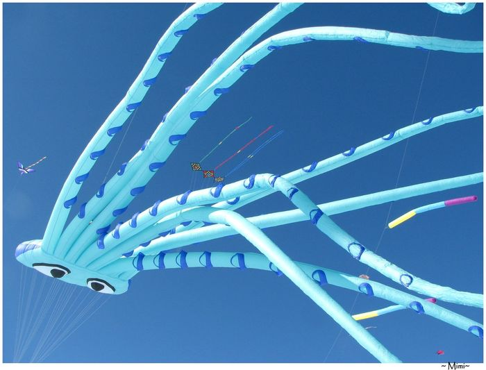 Blue Flying In The Sky Flying Kites Giant Kites Kite Kite Festival Kites Octopus St-Placide Quebec