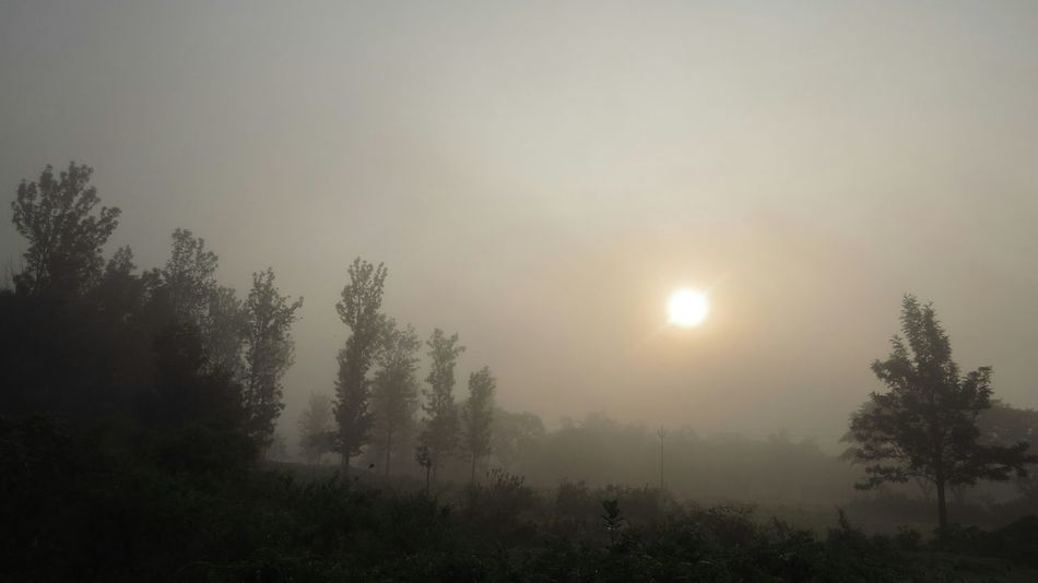 Sunrise Fog Foggy Morning Masinagudi In The Forest Check This Out Early Morning Photoshoot Plam Trees