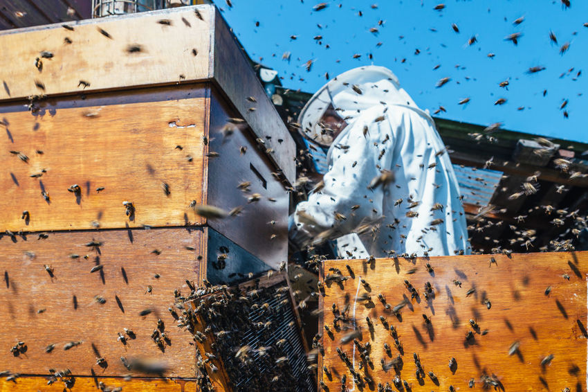The Week On EyeEm Nest Apiary Hive Pollen Beehive Beekeeper Beekeeping Honey Bee Extraction Agriculture Production Honey Bees Keeping Honey Production Real People Honeycomb Food Bees Beeswax Smoker Insect Organic Summer Colony The Photojournalist - 2018 EyeEm Awards