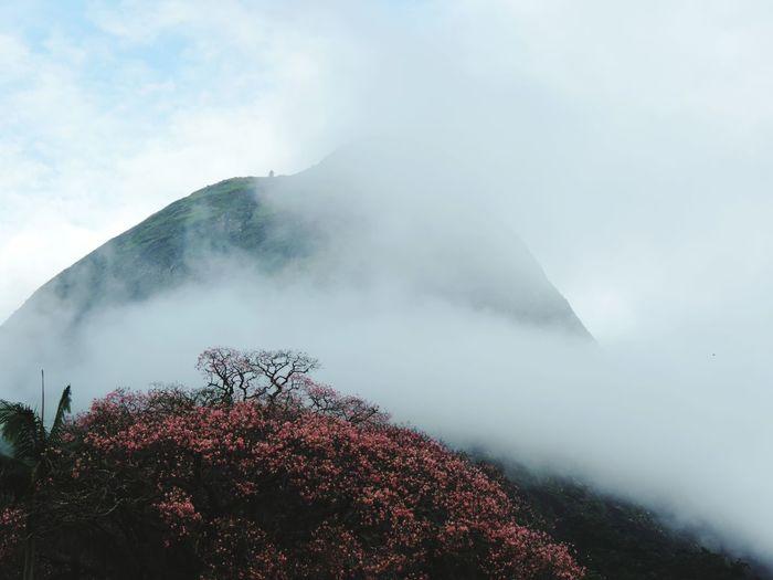 mist and flowers Water Mountain Fog Tree Sky Landscape Cloud - Sky