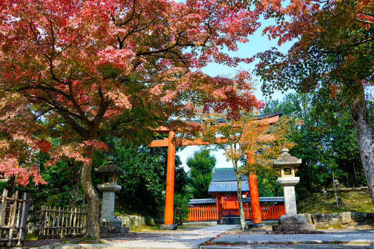 Architecture Autumn Beauty In Nature Building Exterior Built Structure Change Day Growth Leaf Nature No People Outdoors Red Shinto Sky Tori Gate Tori Gates Tree