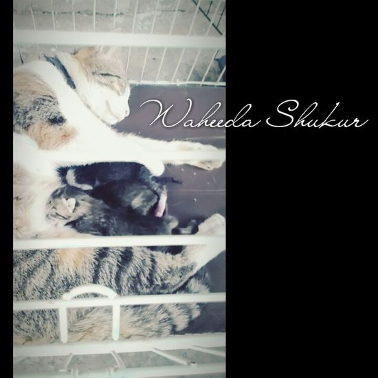 Check This Out So Cute :) At My House <3 Photographer W ♥