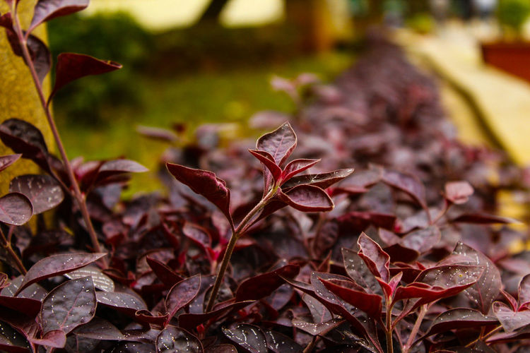 Serenity Nature_collection No People Close-up Indoors  Day Pattern Highshutter Cannonphotography Bokehlicious