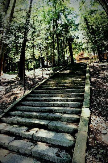 Tree Steps Day