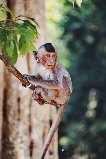 Portrait of monkey on tree branch