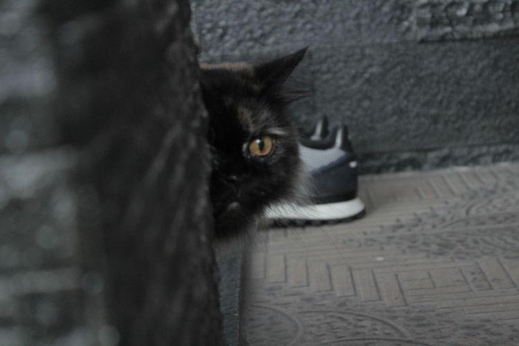 Portrait of black cat relaxing outdoors