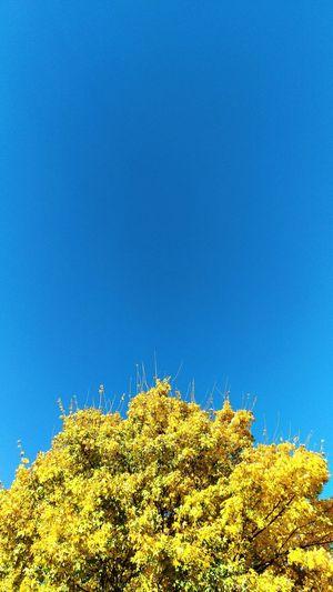 Herbst, goldener. Herbstfarben