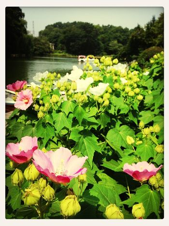 sunny summer day!