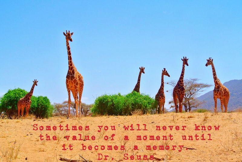 What I Value Samburu Kenya Animals My Favorite Photo Giraffe EyeEm Nature Lover Nature Photography Safari Animals Safari Kenya Quote ♥ Quoteoftheday Fine Art Photography