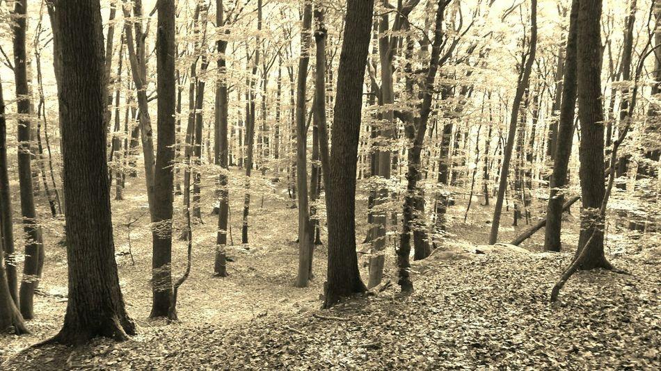 Forest Taunus Im Wald Natur Genießen