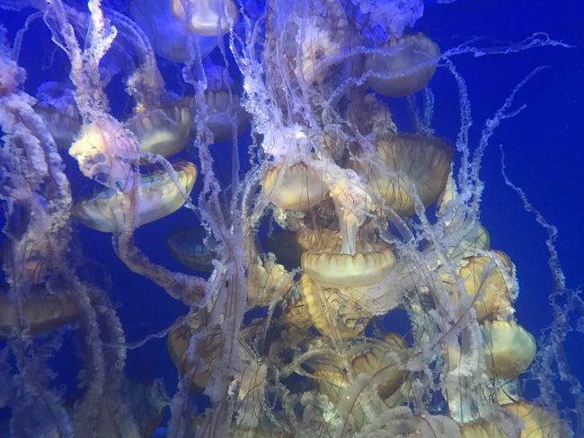 Underwater Water Swimming Jellyfish Smooth Sea Life No People Close-up Beauty In Nature Nature UnderSea
