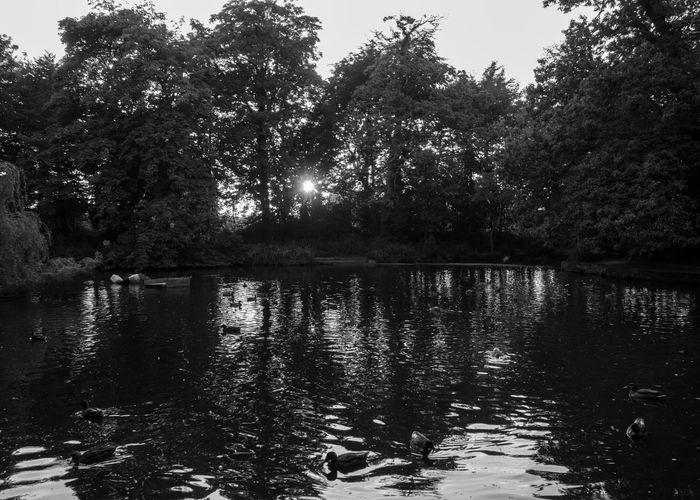 Botanic Gardens at sunset