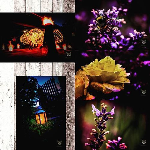 I have once again time to edit a few photos :) Individual pictures will follow :) Fotografie Salzgitter Roses Hummel Lavendel Lavender Lavenderfield Lavendelfeld Photographyislife Photgraphy Naturfoto Naturephotography Macro Bumblebee Langzeitbelichtung Bulbexposure Feuershow Fireshow Hades Perséphone