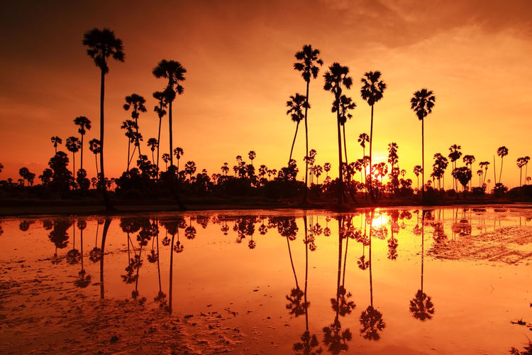 Sugar palm sunset in Thailand Sunset Sky Reflection Orange Color Water Tree Silhouette Beauty In Nature Tranquility Scenics - Nature Plant Tranquil Scene Palm Tree Tropical Climate Nature Cloud - Sky No People Lake Idyllic Outdoors Coconut Palm Tree