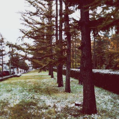 осень Omsk город Autumn