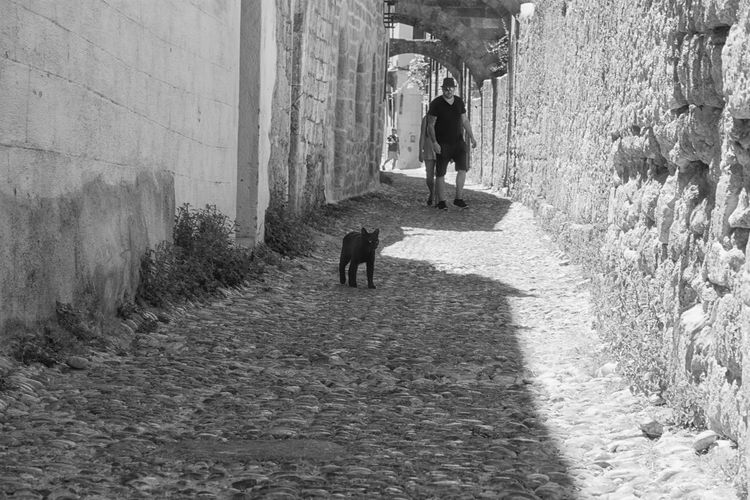 The Street Photographer - 2018 EyeEm Awards Alley Animal Animal Themes Architecture Built Structure Canine Day Direction Dog Domestic Domestic Animals Full Length Mammal One Animal Outdoors Pet Owner Pets Real People Rear View Stone Wall The Way Forward Vertebrate Walking Wall - Building Feature