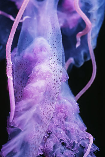 Close-up of water on pink flower