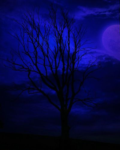 Night Bare Tree Moon Tree Full Moon Silhouette Star - Space Landscape Moonlight Blue Nature Beauty In Nature Outdoors Illuminated Astronomy Sky Amateurphotography Student Canonphotography Beauty In Nature Nightshot Nightlife Scotland