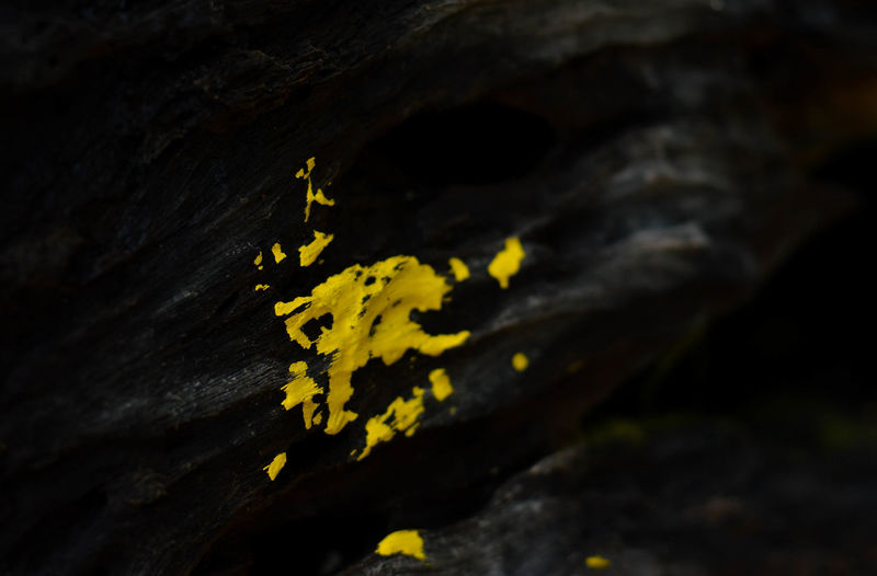 """""""Paint yellow on the twig."""" - 1/365 Yellow Leaf Autumn Outdoors Day Close-up No People Nature Beauty In Nature"""