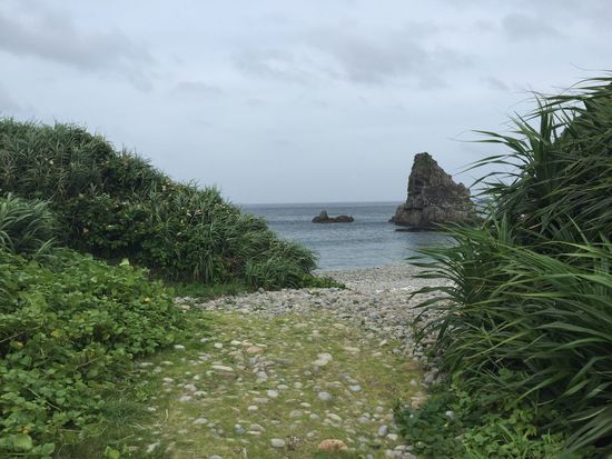 Sea Plant Growth Nature Water Sky Beauty In Nature Outdoors Scenics Day No People Horizon Over Water Kagoshima in Amami Island Japan