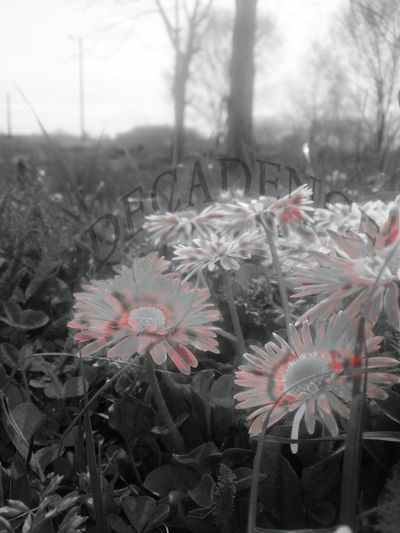 These Flowers smelled Sour, had to mown them though.