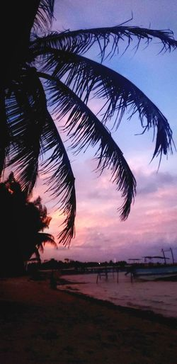 The Mobile Photographer - 2019 EyeEm Awards Tree Water Palm Tree Sunset Sea Beach Silhouette Reflection Sky Landscape