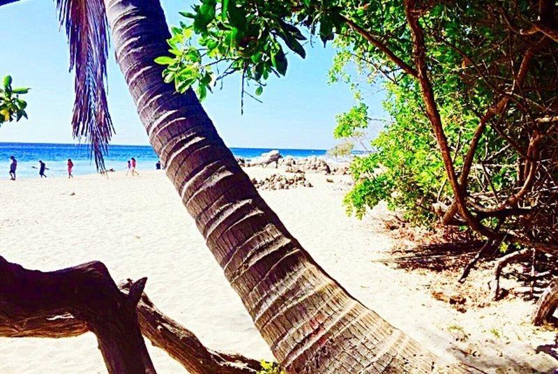 Nature Sea Beach Beautiful Nature Beautifulplace Tree Trunk Palm Tree Trunk Tree Beauty In Nature Sand Sand & Sea Sky Horizon Over Water Tranquility