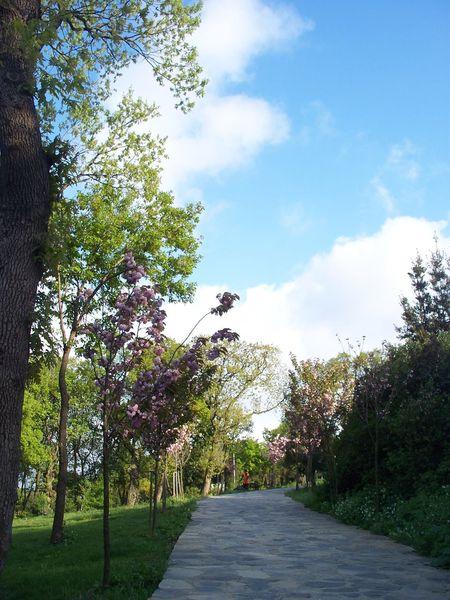 Tree Flower Beauty In Nature Sky Day Landscape Travel Photography Büyükçamlıca Istanbul Turkey Koru